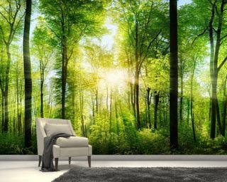 Forest Panoramic With Sunbeams Wall Mural Wallpaper Part 38