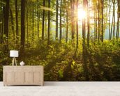 Forest Sunlight mural wallpaper living room preview