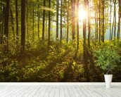 Forest Sunlight mural wallpaper in-room view