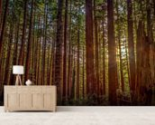 Redwood Sun wall mural living room preview