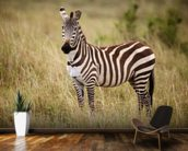 Zebra in Long Grass mural wallpaper kitchen preview