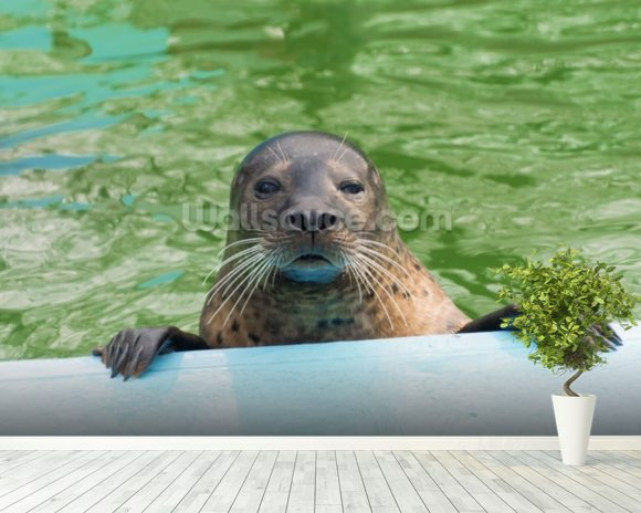 Harbor seal (Phoca vitulina) wallpaper mural room setting