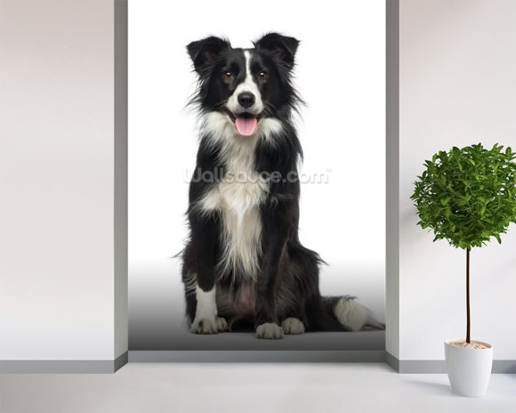 Border Collie wall mural room setting