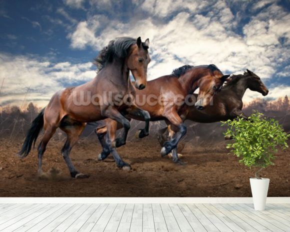 Jumping Bay Horses mural wallpaper room setting