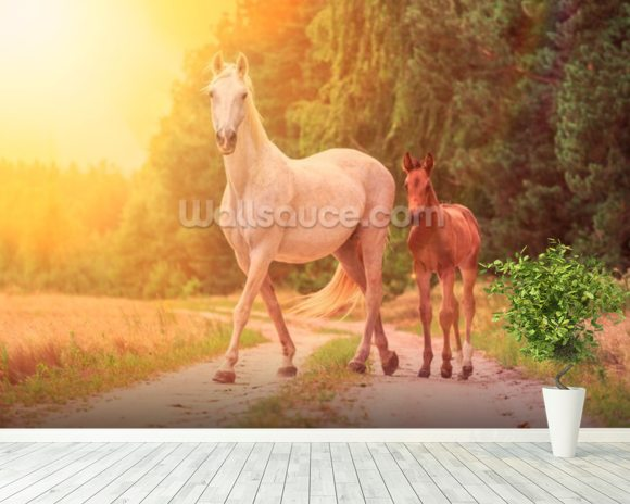 Sunlit Mare and foal wall mural room setting