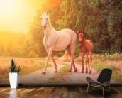 Sunlit Mare and foal wall mural kitchen preview