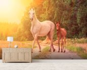 Sunlit Mare and foal wall mural living room preview