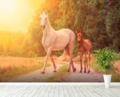 Sunlit Mare and foal wall mural in-room view