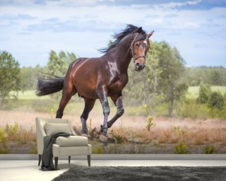 Beautiful Horse in Motion wallpaper mural