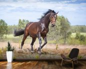 Beautiful Horse in Motion wallpaper mural kitchen preview