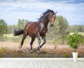 Beautiful Horse in Motion wallpaper mural in-room view