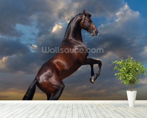 Rearing Bay Horse and Sky wall mural room setting