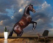 Rearing Bay Horse and Sky wall mural kitchen preview