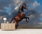 Rearing Bay Horse and Sky wall mural living room preview