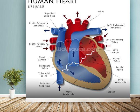 Human heart diagram wallpaper wall mural wallsauce uk human heart diagram wallpaper mural room setting ccuart Gallery