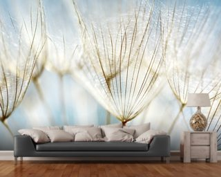 Dandelions Wall Mural Wallpaper Wall Murals Wallpaper