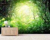 Deep Forest Light wall mural living room preview