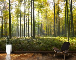Sunny Forest Wallpaper Mural Wall Murals Wallpaper