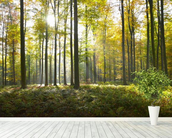 sunny forest wall mural sunny forest wallpaper wallsauce