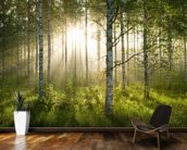 Birch Forest Sunlight wallpaper mural kitchen preview