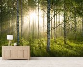 Birch Forest Sunlight wallpaper mural living room preview