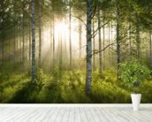 Birch Forest Sunlight wallpaper mural in-room view