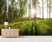 Sunlit Birch Tree Woodland mural wallpaper living room preview