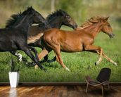 Peruvian Paso Horses wall mural kitchen preview