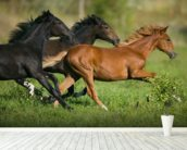 Peruvian Paso Horses wall mural in-room view