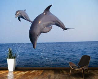 Flying Dolphins wallpaper mural