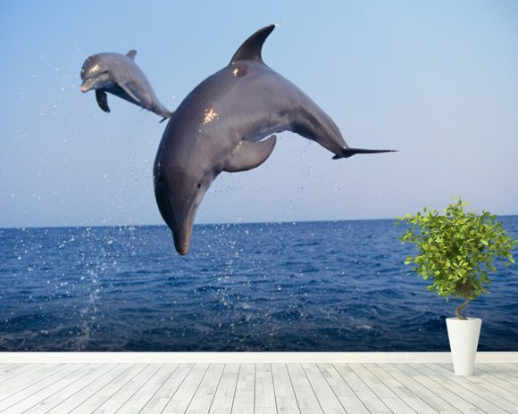 Flying Dolphins wallpaper mural room setting