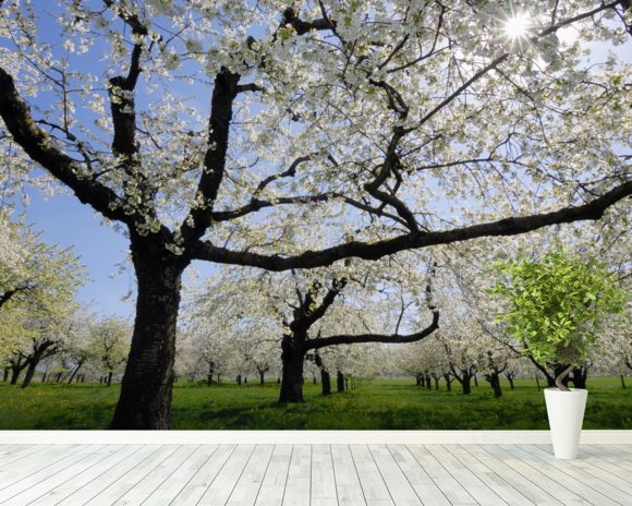 Cherry Trees wall mural room setting