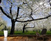 Cherry Trees wall mural kitchen preview