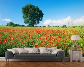 Sunny Spring Poppies Mural Wallpaper Part 84