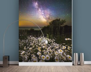 Daisies Under A Starlit Sky mural wallpaper