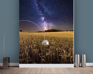 Fields of Gold wallpaper mural