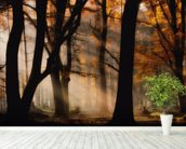 Autumn Light mural wallpaper in-room view