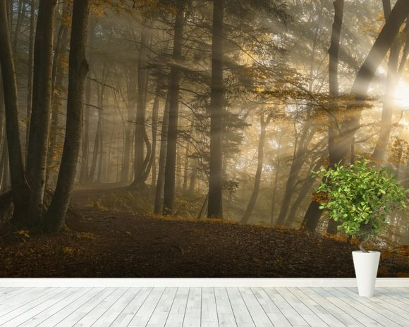 Forest Light wall mural room setting