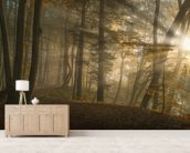 Forest Light wall mural living room preview