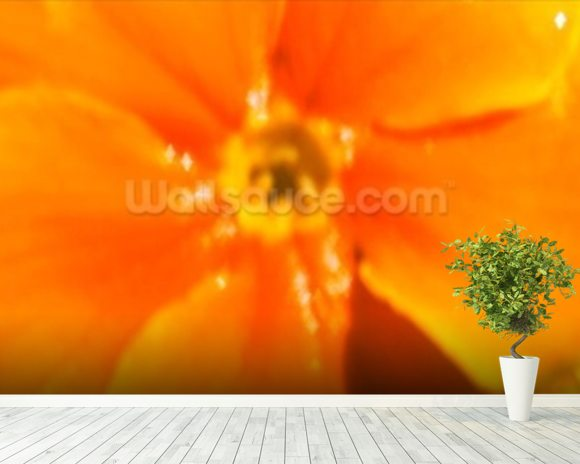 Winter Sunshine (colour photo) mural wallpaper room setting