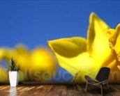 Daffodil Line (colour photo) mural wallpaper kitchen preview