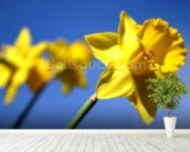 Daffodil Line (colour photo) mural wallpaper in-room view