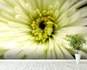 Birthday Flower (colour photo) wallpaper mural in-room view