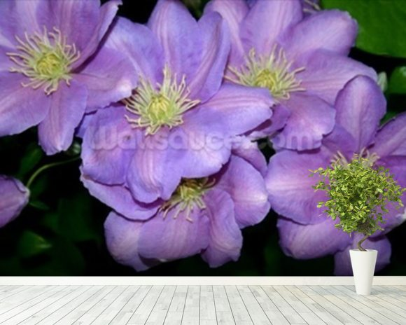 The Clematis Gang (colour photo) mural wallpaper room setting