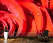 Valentines (colour photo) wallpaper mural kitchen preview