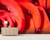Valentines (colour photo) wallpaper mural living room preview