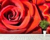 Valentines (colour photo) wallpaper mural in-room view