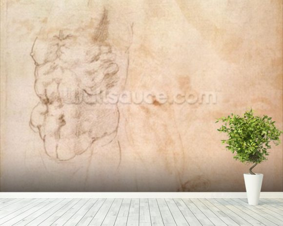 Torso Study (red & black chalk on paper) wallpaper mural room setting