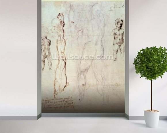 Anatomical drawings with accompanying notes (red chalk) wallpaper mural room setting