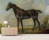 Golding Constables Black Riding-Horse, c.1805-10 (oil on panel) wall mural living room preview
